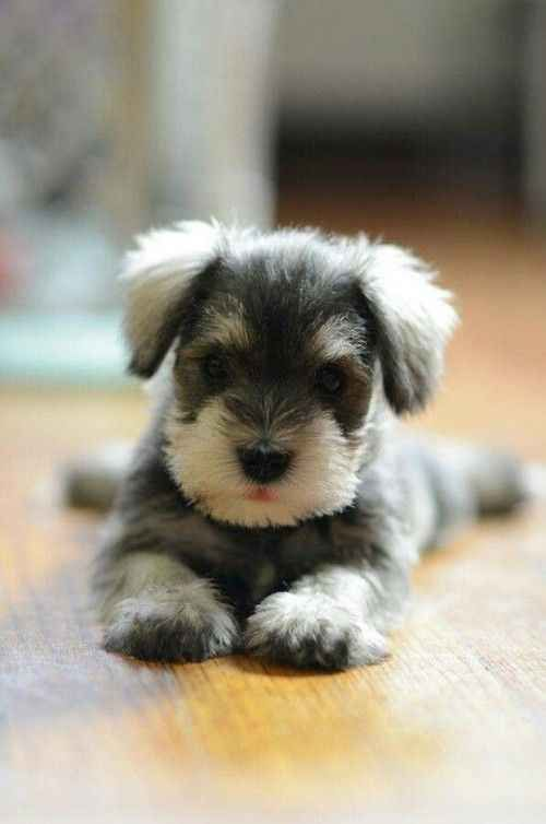 The cutest puppy soothes our hearts cutest puppy enrich our life