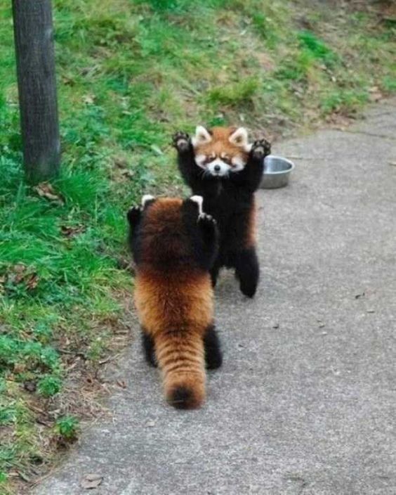 35 Funny Furry Animals To Brighten Your Day Funny animals,cute animals,baby animals